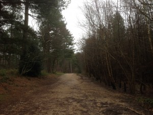 Bere Forest